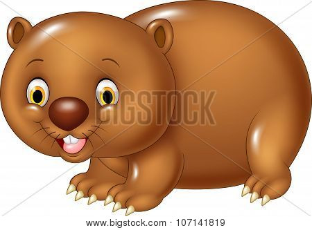 Cartoon funny wombat animal isolated on white background