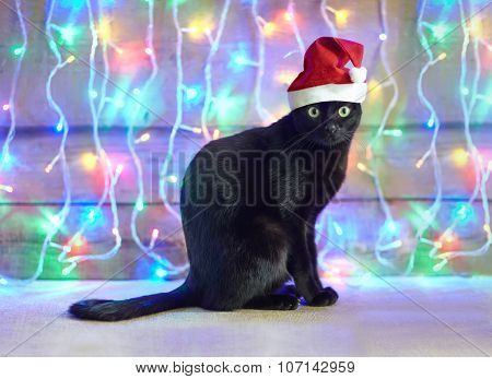Black Cat In Santa Claus Xmas Red Hat