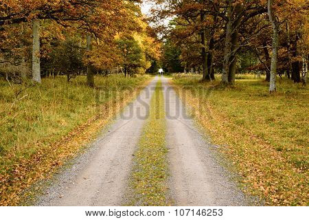 Straight Autumn Road