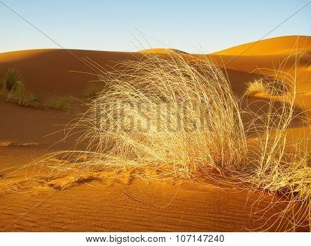 Grass In Sand Desert