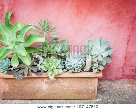 Cactus In Pot With Red Background