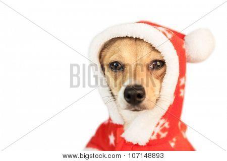 Cute festive dog in christmas jacket on white background
