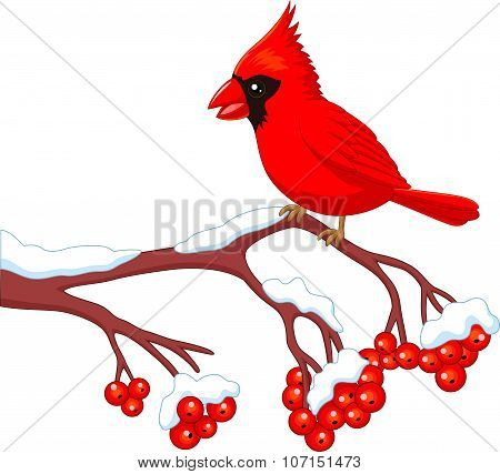 Cartoon beautiful cardinal bird posing on the berry tree