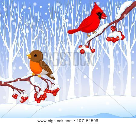 Cute cartoon robin bird and cardinal bird on the berry tree with winter background