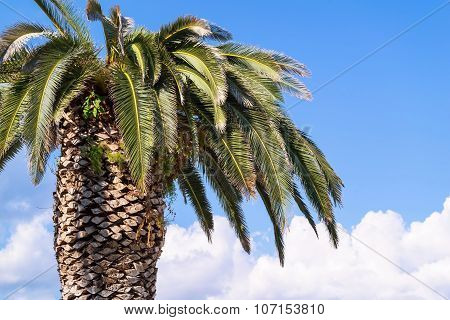 One Big Palm Tree