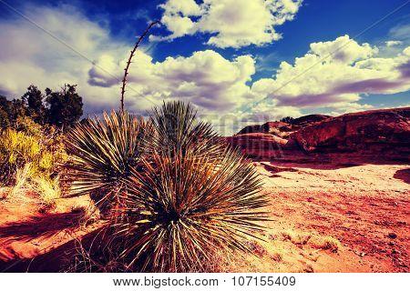 American landscapes