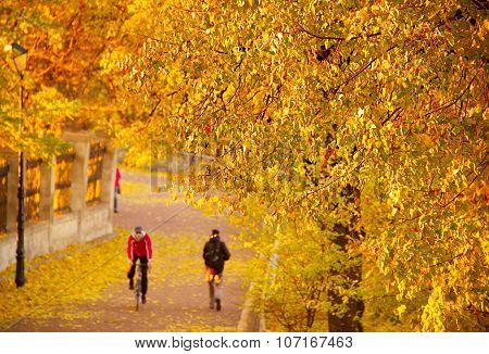 Sport Activity In Autumn Park