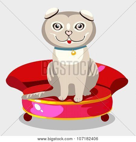 Scottish fold kitten on a red sofa