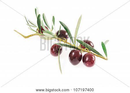 Fresh Organic Olives