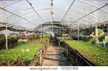 Gardening In Dome