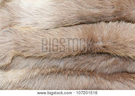 Animal Fur Texture