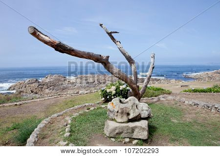 Beautiful coast landscape with a dry tree