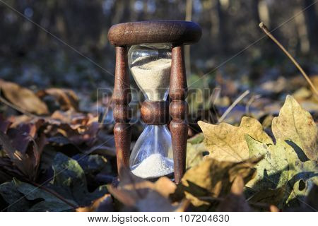 Vintage hourglass in autumn forest
