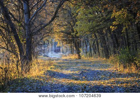 Nice evening scene with autumn rut road in forest
