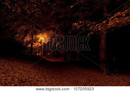 Forest pathway in the night