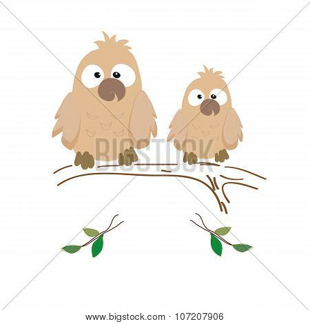 Two Nestling Owls