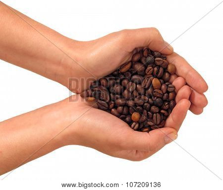 Front view from a female hands holding a bunch of coffee beans isolated on White background.
