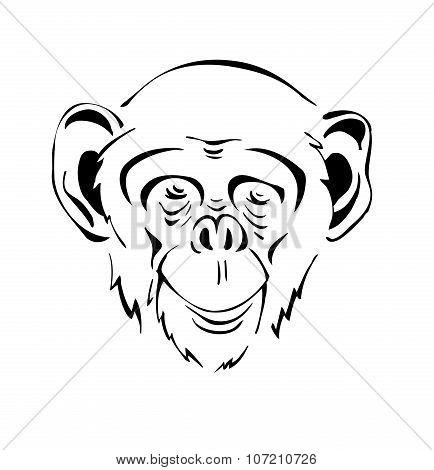 head the chimpanzee