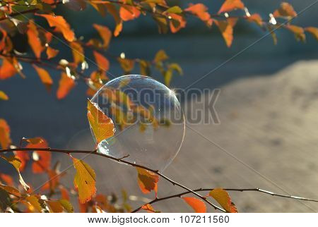 A soap bubble on a branch with red leaves beautifully shimmers in the sun