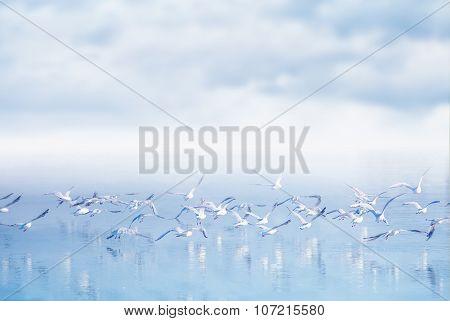 Flock Of Seagulls Flying Over Lake