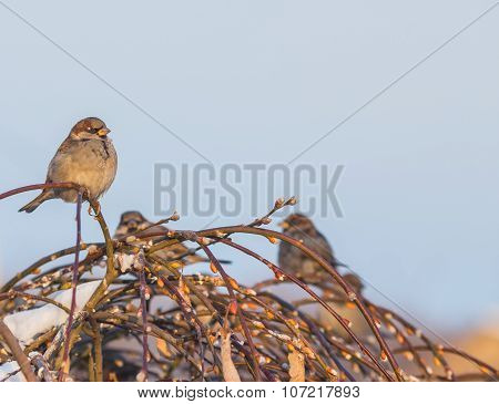 Sparrow bird in tree
