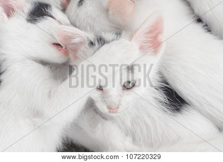 Cute little kittens looking at camera
