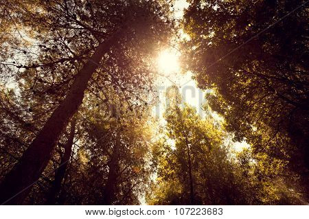 Wide Angle View Of Forest And Sun Rays
