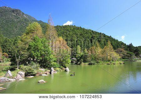 Lake with black swan