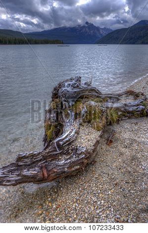 Driftwood By The Lake.