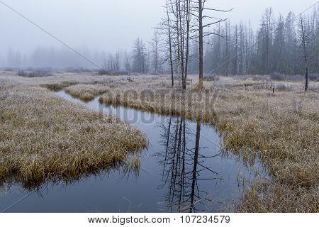 Calm Stream In Wetlands.