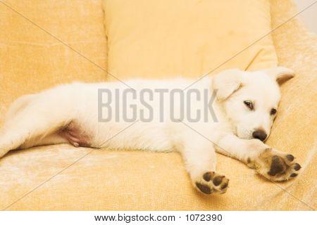 Puppy #1