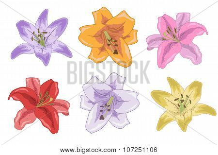 Set Of Bright Lilies For Your Design