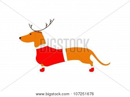 Dachshund In Reindeer Horns And Christmas Suit
