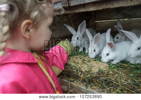 Little Caucasian Fair Haired Girl Feeding Group Of Domestic Rabbits With Fresh Grass