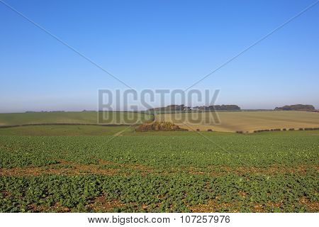 Scenic Agriculture