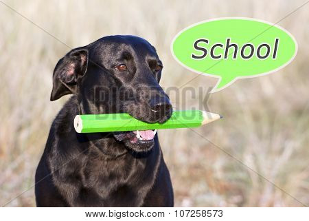Dog Thinking School