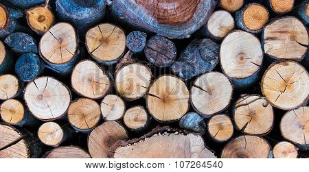 Cutted Logs bright background