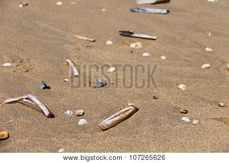 Sea Shells On Wet Sand. Summer North Sea In Zandvoort, The Netherlands
