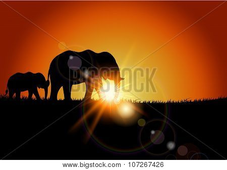 Animal background of elephant when sunset