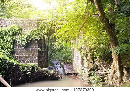 the stone bridge in the jungle of Mauritius