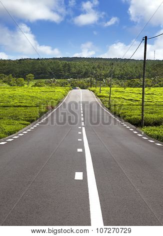 Mauritius. The road among green tea fields.