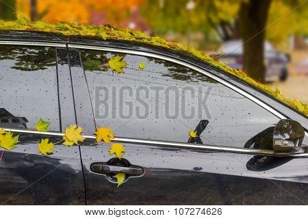 Wet Fallen Leaves On Car