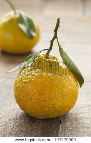 Fresh picked ripe organic mandarin