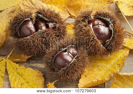 Heap of whole spiky sweet chestnuts and leaves
