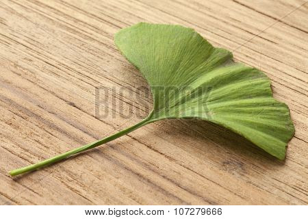 Single green Ginkgo biloba leaf