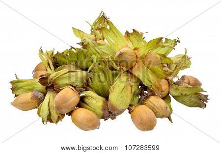 Cobnuts Isolated On White