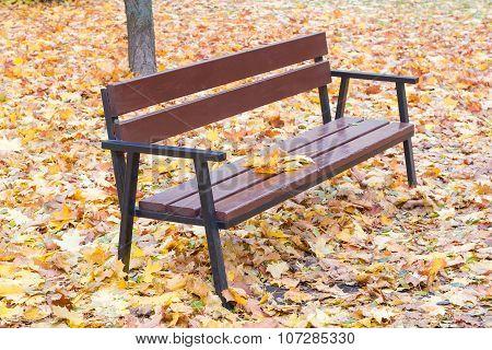 Garden Bench Among Fallen Leaves