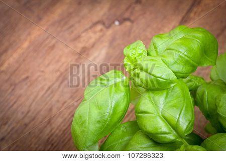 Fresh basil herb on wooden board