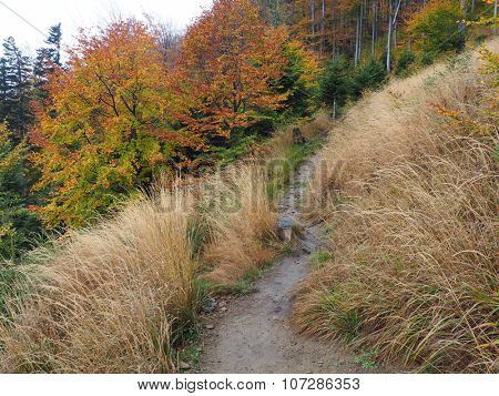Autumn in polish mountains Beskidy.