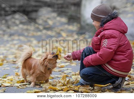 Boy Plays With A Pekingese And Leaf